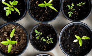 US seed-stage investing flourished during pandemic – TechCrunch